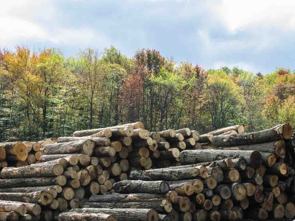 logs from certified forest in Kane yard