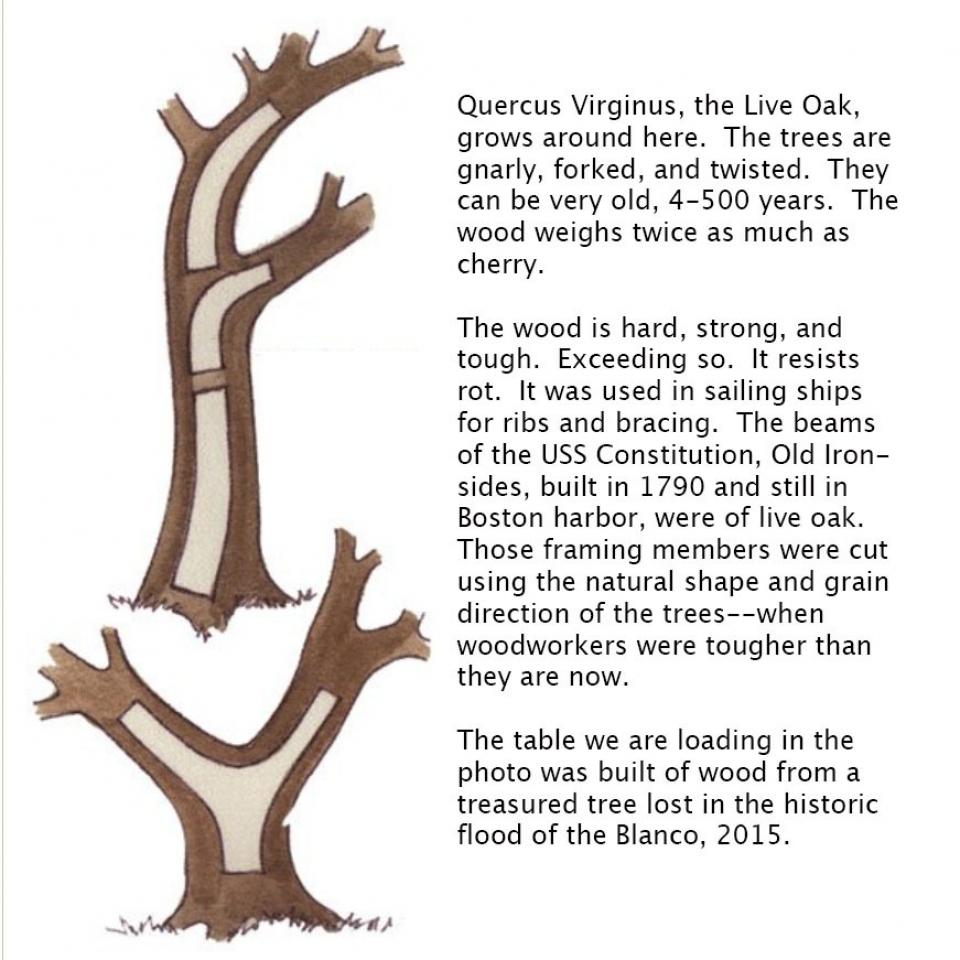 Live oak text