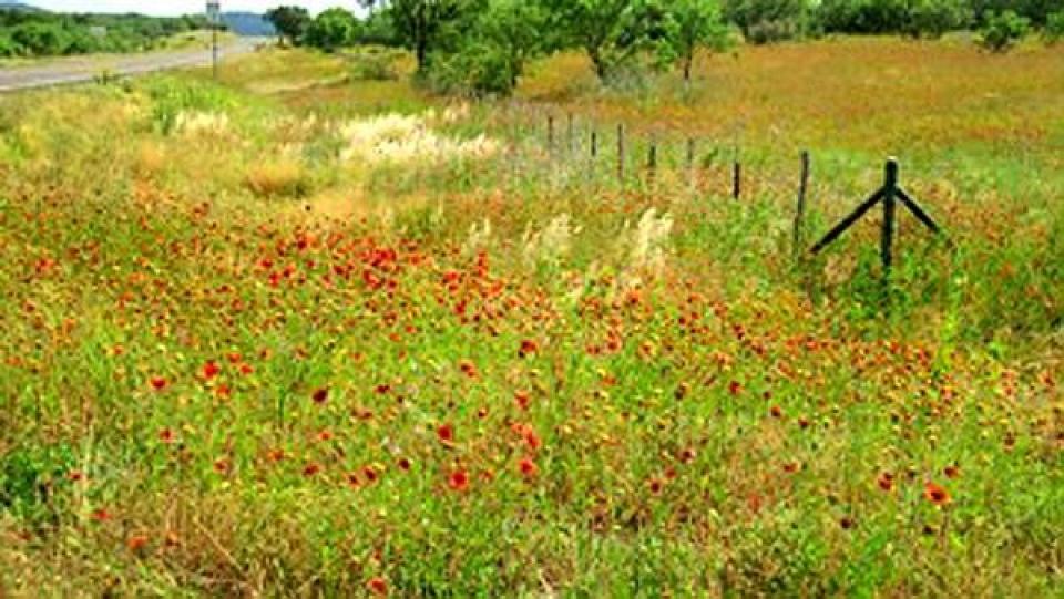 roadside wildflowers along fence