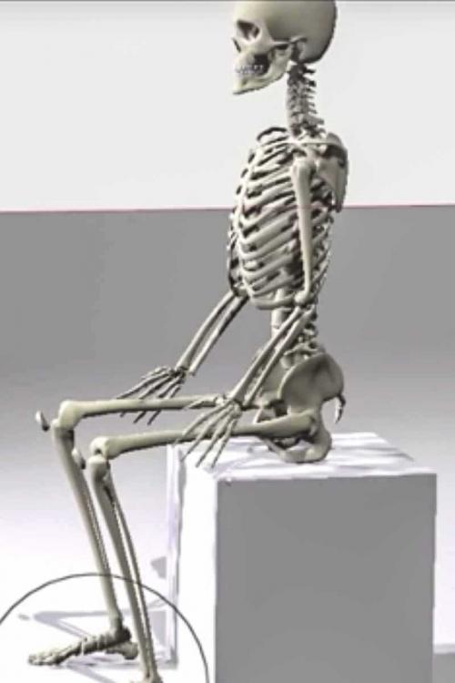 skeleton sitting