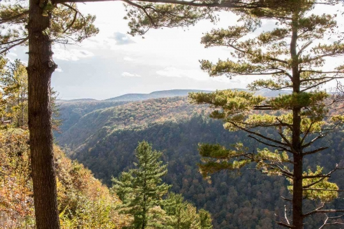 Pennsylvania forest near Irion Lumber